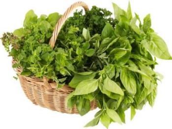Cultiver-ses-plantes-médicinales